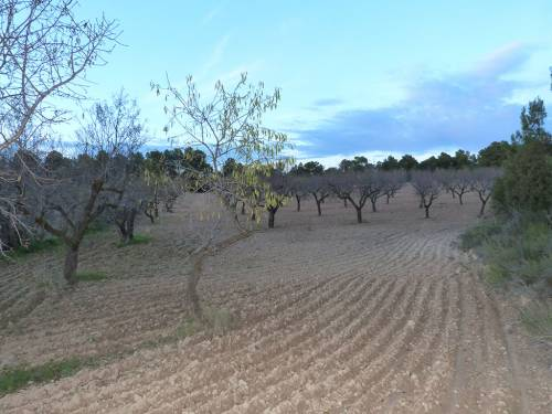 Torre del Compte - Almond grove of about 1 hectare